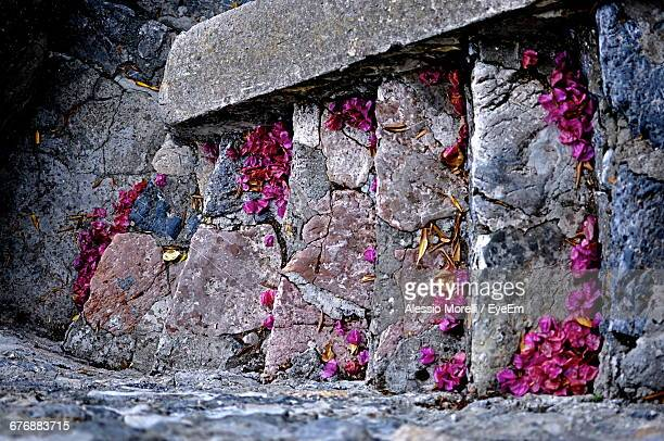 Directly Above View Of Fallen Pink Flowers On Steps