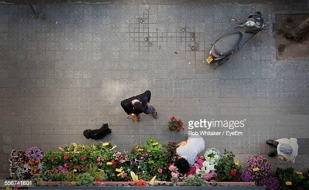 Directly Above View Of Flower Shop