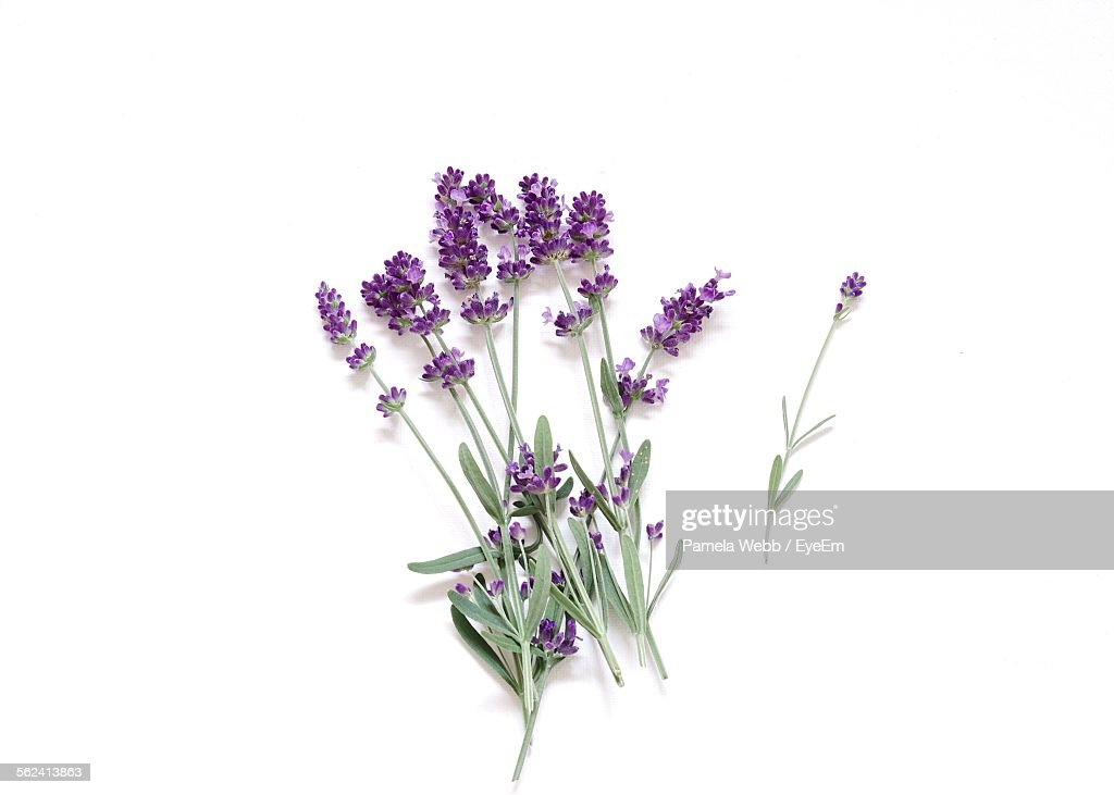 Directly Above View Of Fresh Lavender Flowers Against White Background : Foto de stock