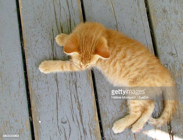 Directly Above View Of Ginger Cat Lying Down On Boardwalk