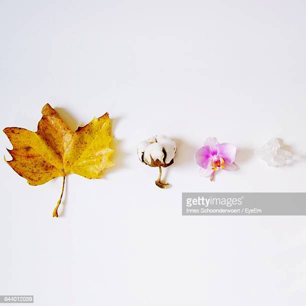 Directly Above View Of Leaf And Flowers On White Background
