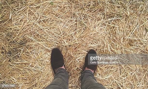 Directly Above View Of Man Standing On Hay