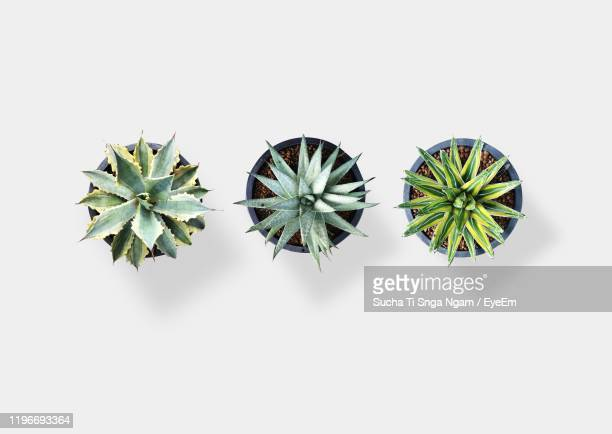 directly above view of plants against white background - pot plant stock pictures, royalty-free photos & images