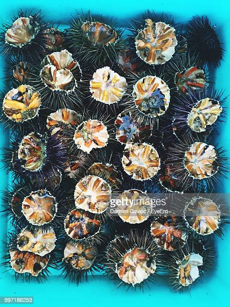 Directly Above View Of Sea Urchins In Bucket