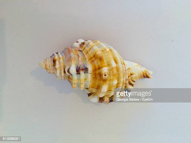 Directly Above View Of Seashell On White Background