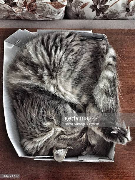 Directly Above View Of Tabby Sleeping In Box