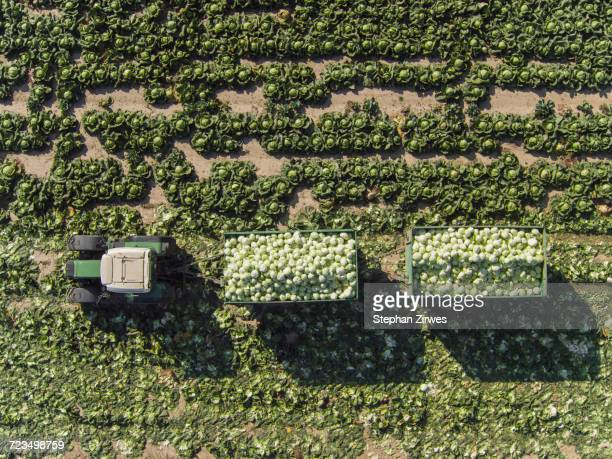 Directly above view of tractor and trailers of cabbage in field, St. Poelten, Austria