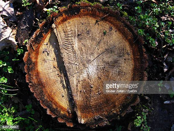 directly above view of tree stump - tree stump stock pictures, royalty-free photos & images