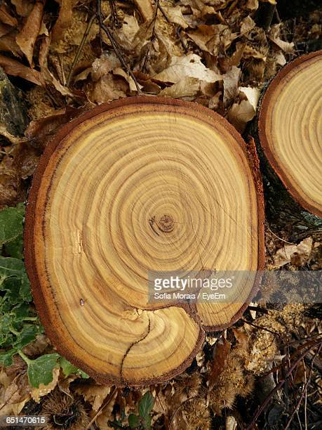 Directly Above View Of Tree Stumps In Forest