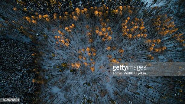Directly Above View Of Trees On Field In Forest