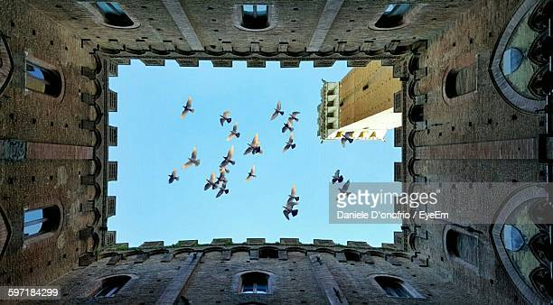directly below shot of birds flying against clear sky - siena italy stock photos and pictures