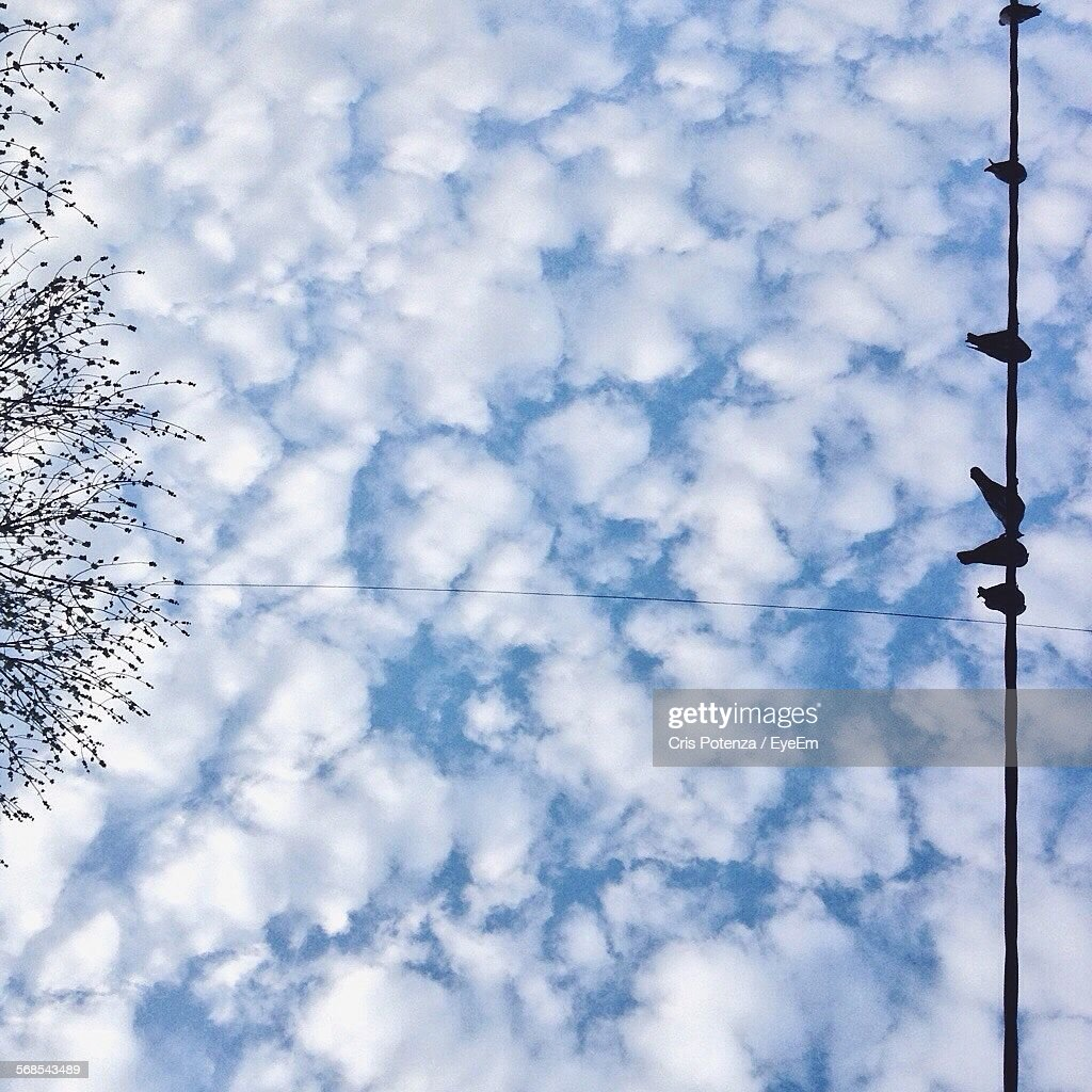 Directly Below Shot Of Birds Perching On Rope Against Cloudy Sky : Stock Photo