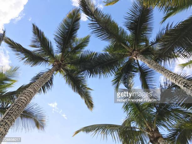 Directly Below Shot Of Coconut Palm Trees Against Sky