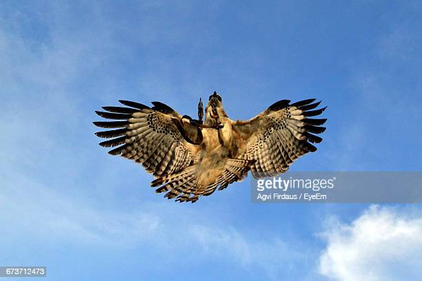Directly Below Shot Of Eagle Flying In Sky