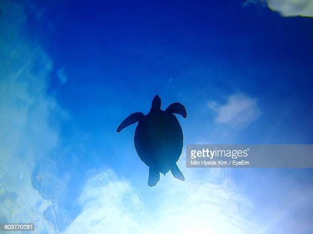 Directly Below Shot Of Silhouette Green Turtle Swimming In Sea Against Sky