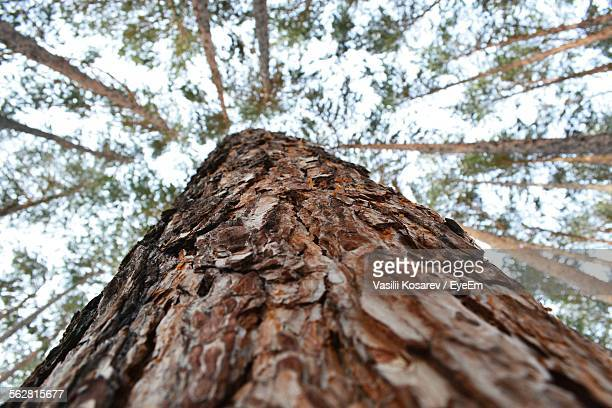 directly below shot of tree trunk - durability stock photos and pictures