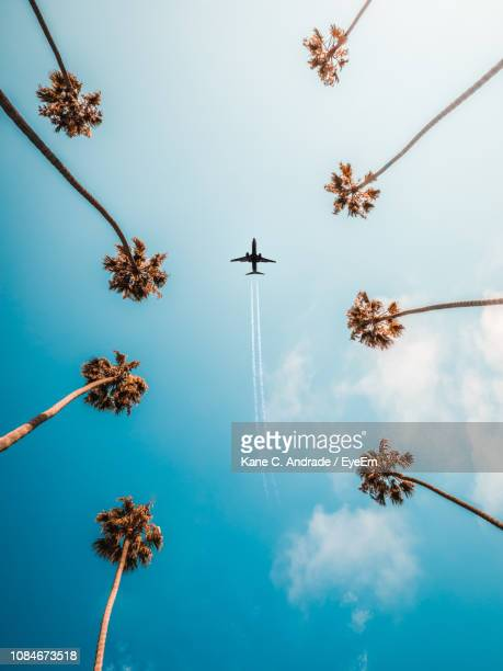 directly below shot of trees and airplane against sky - palm tree stock pictures, royalty-free photos & images