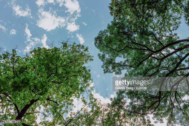 Directly Below Shot Of Trees Growing Against Blue Sky