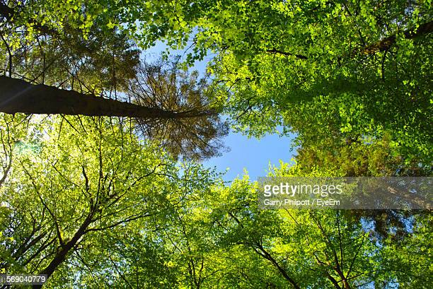 Directly Below Shot Of Trees In Forest