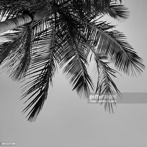 Directly Below View Of Coconut Palm Tree Against Clear Sky