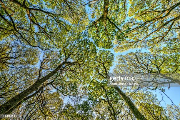directly below view of trees in forest - forest stock pictures, royalty-free photos & images