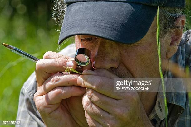 Director and Curator of the herbarium university of Clermont Ferrand Gilles Thebaud examines plants in a pasture in Mazaye central France on July 8...