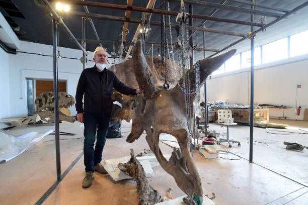 "ITA: ""Big John"", World's Biggest Triceratops, Is Reconstructed In Trieste"