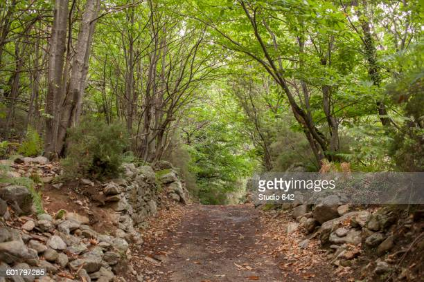 dirt path in remote forest - herault stock pictures, royalty-free photos & images