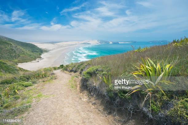 dirt path on coastal hillside, te werahi, cape reinga, new zealand - northland new zealand stock pictures, royalty-free photos & images