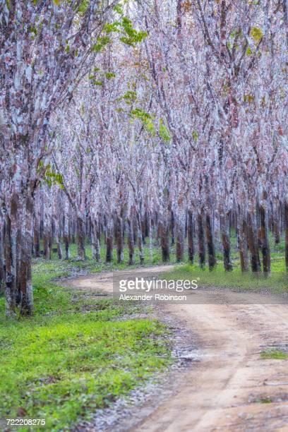 Dirt path under flowering trees