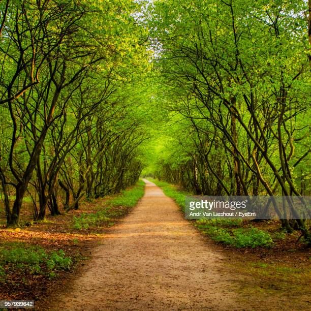 Dirt Road Along Trees And Plants