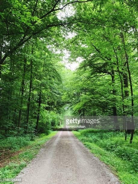 dirt road along trees in forest - bortes - fotografias e filmes do acervo