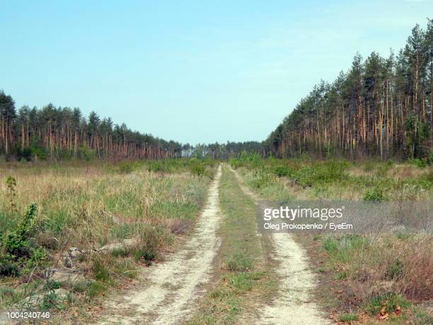dirt road along trees on field against sky - oleg prokopenko stock pictures, royalty-free photos & images