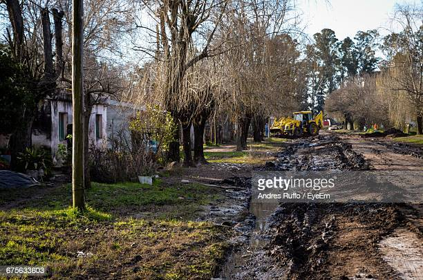 dirt road amidst bare trees on field - andres ruffo stock pictures, royalty-free photos & images