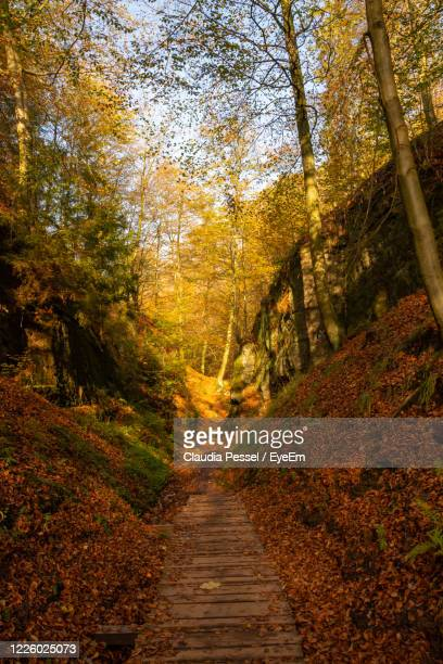 dirt road amidst trees in forest during autumn - アイゼナッハ ストックフォトと画像
