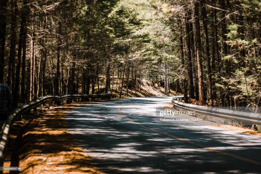 Dirt Road Amidst Trees In Forest : Stock Photo
