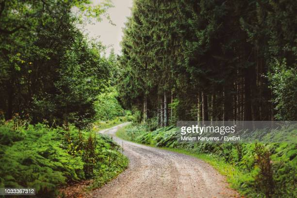 dirt road amidst trees in forest - wald stock-fotos und bilder