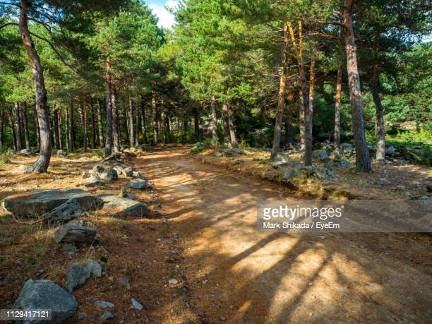 dirt road amidst trees in forest - mark's stock pictures, royalty-free photos & images