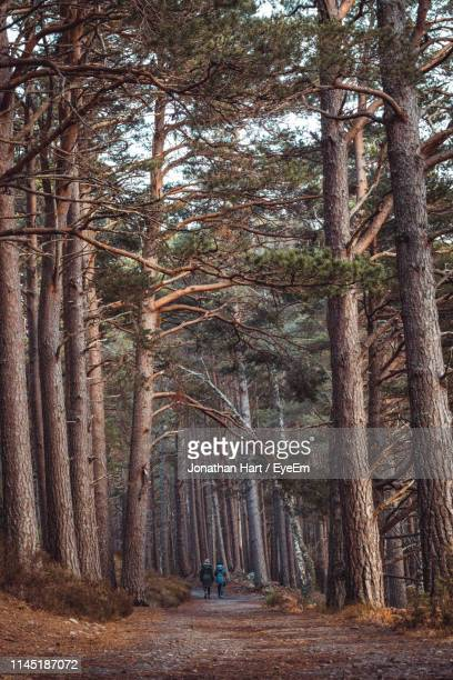 dirt road amidst trees in forest - incidental people stock pictures, royalty-free photos & images