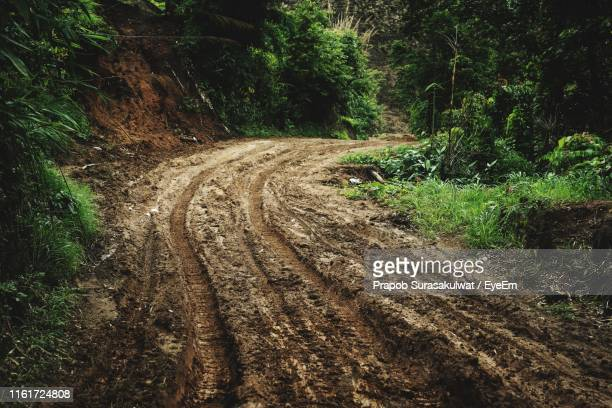 dirt road amidst trees in forest - track imprint ストックフォトと画像