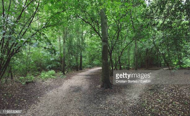 dirt road amidst trees in forest - bortes stock pictures, royalty-free photos & images