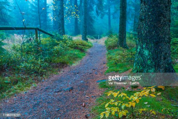 dirt road amidst trees in forest - val thoermer stock-fotos und bilder