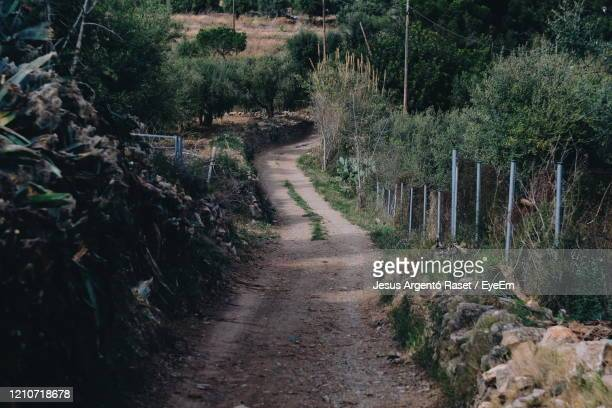 dirt road amidst trees in forest - reus spain ストックフォトと画像