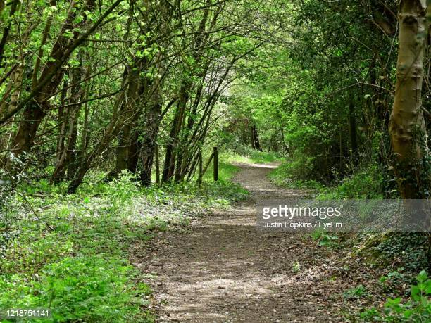 dirt road amidst trees in forest - coventry stock pictures, royalty-free photos & images