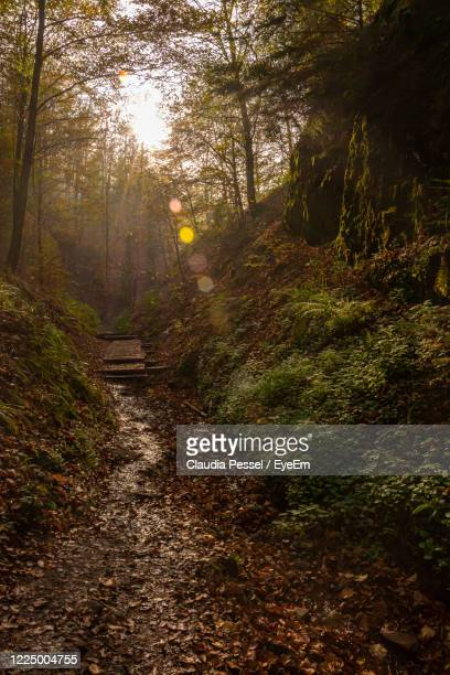dirt road amidst trees in forest - アイゼナッハ ストックフォトと画像
