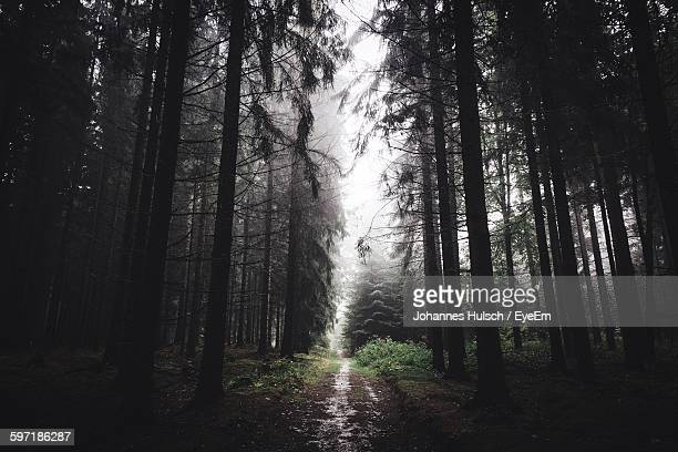dirt road amidst trees in forest - chemnitz stock pictures, royalty-free photos & images