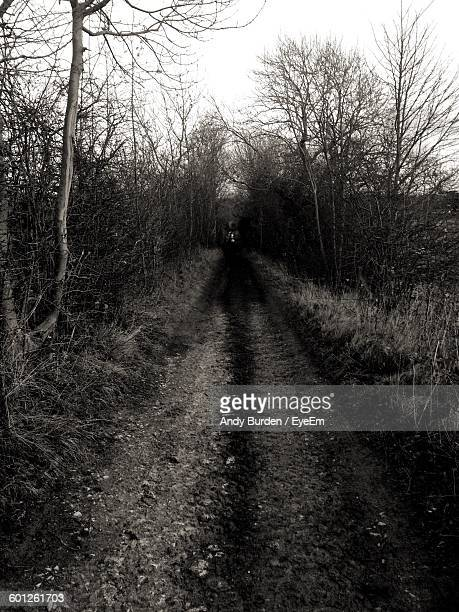 dirt road amidst trees - malton stock pictures, royalty-free photos & images