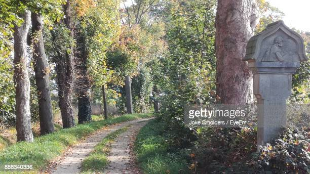 dirt road amidst trees - goch stock photos and pictures