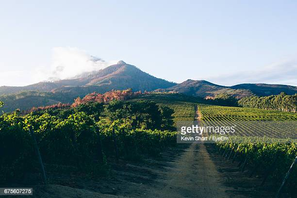 Dirt Road Amidst Vineyard Against Sky
