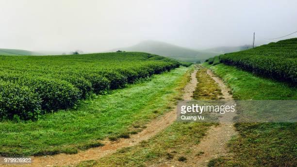 dirt road among tea fields, moc chau, son la, vietnam - son la stock pictures, royalty-free photos & images